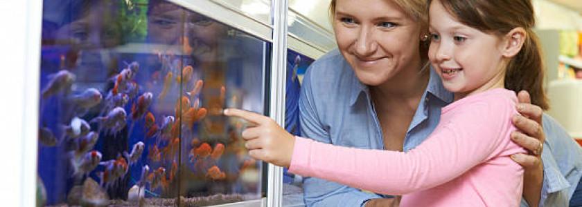 acheter ses poissons d'aquarium et de bassin en animaleries