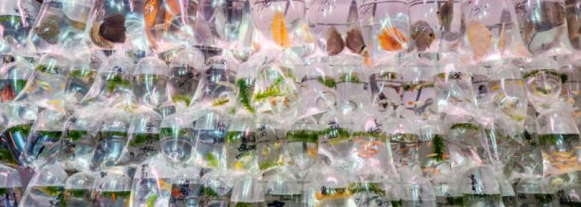 acheter ses poissons d'aquarium et de bassin en bourse