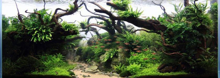 Les algues : 3 paramètres à dimensionner !