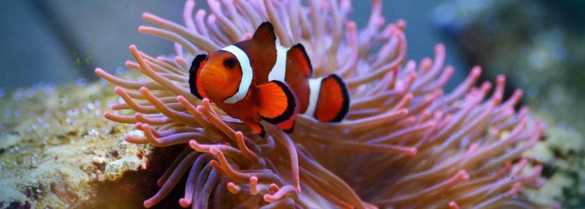 Preparer mon premier aquarium marin recifal