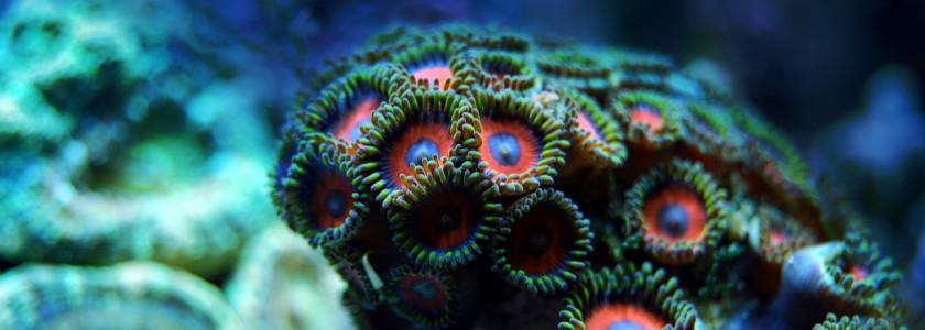 Quelle population pour un nano aquarium en eau de mer ?