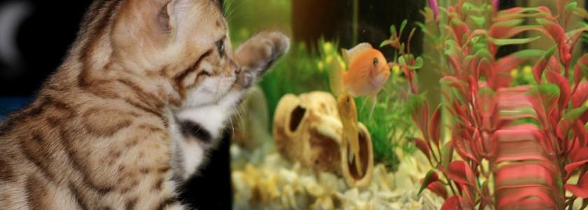 Comment éviter de rater à coup sûr un nouvel aquarium?