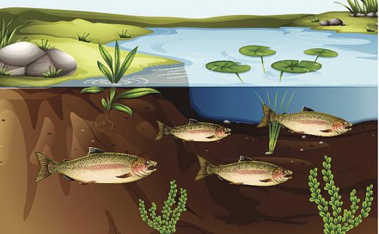 cycle de l'azote aquarium