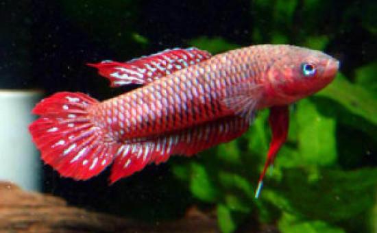 Burdigala (Photo FishFish)