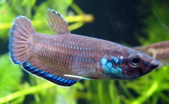 Simplex (Photo FishFish)