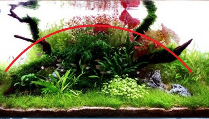 aquascaping convexe