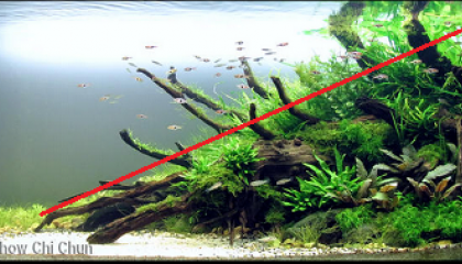 aquascaping composition triangle