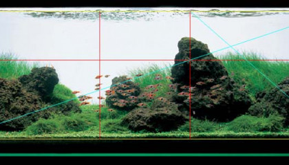aquascaping point focal double