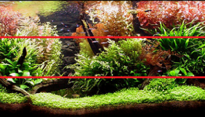 aquascaping lineaire