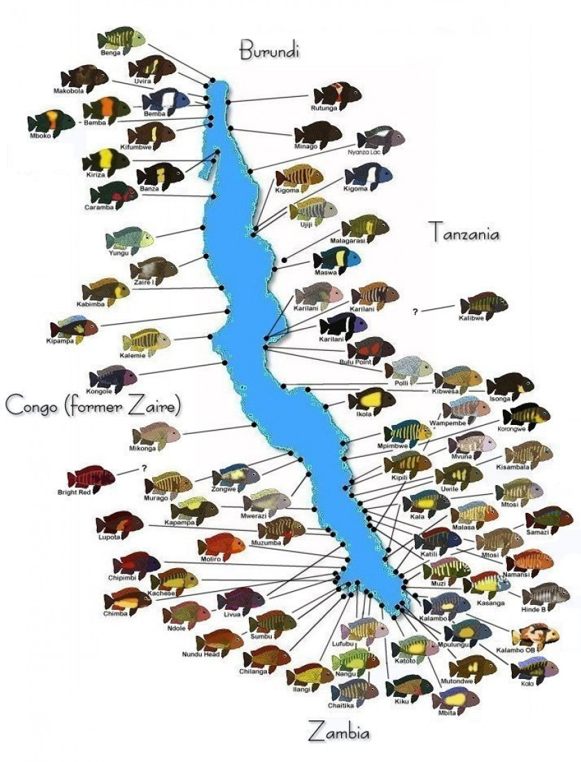 Distribution et répartition géographique des tropheus sur le lac tanganyika
