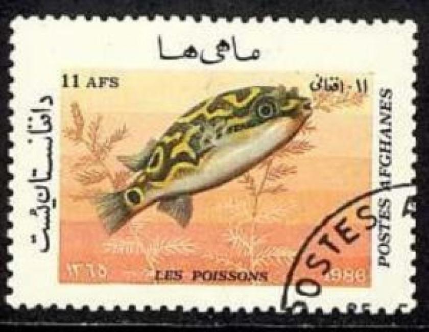 Tetraodon Biocellatus (timbre afghan)