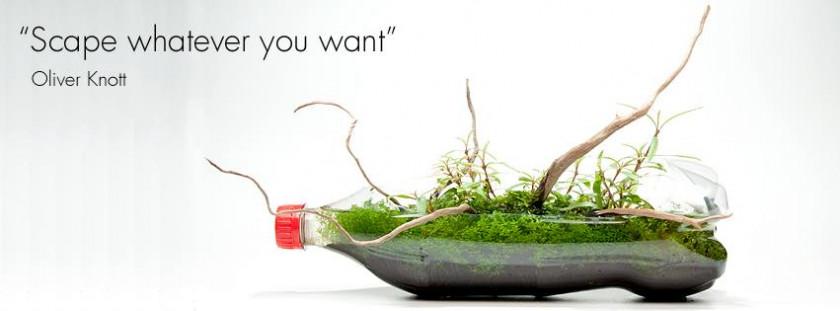 wabi kusa plante imagination