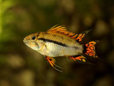 rencontres apps beaucoup de poissons