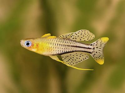 encyclopédie des poissons