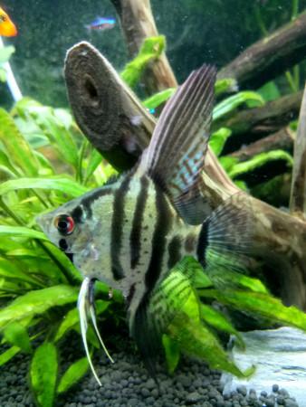 aquariophile Marek