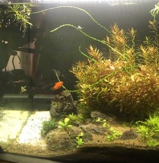aquariophile MayaB