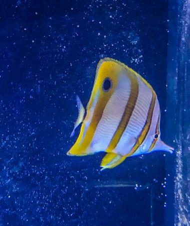 aquariophile Rizza33
