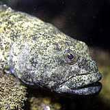 aquariophile M.Cabou