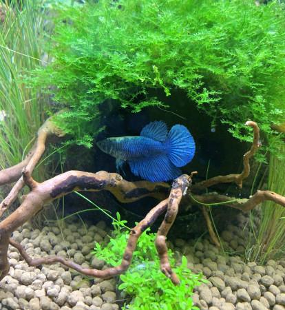 aquariophile AudreyR