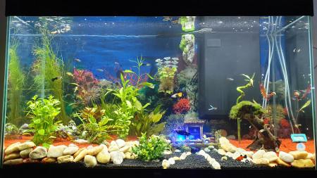 aquariophile Phiphi