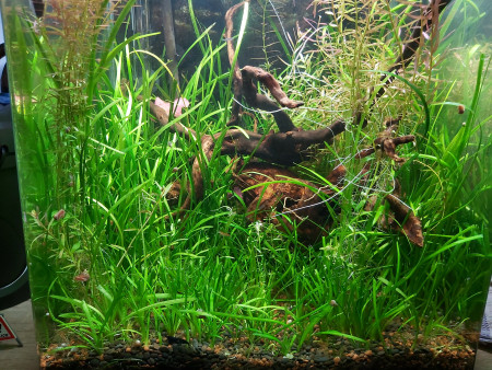 aquariophile Yann80