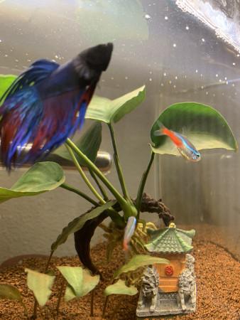 aquariophile Nyso