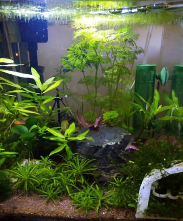 aquariophile Kikicot52