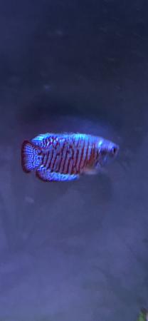 aquariophile mireille-gillmann