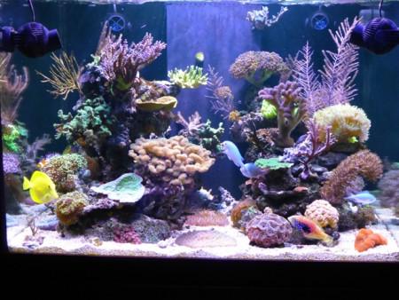 aquariophile Philest76