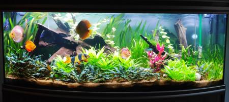 aquariophile Lepetitaquarium14