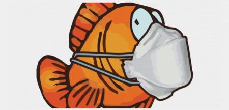 aquariophile Cedric12