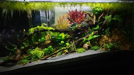 aquariophile AntoOoine