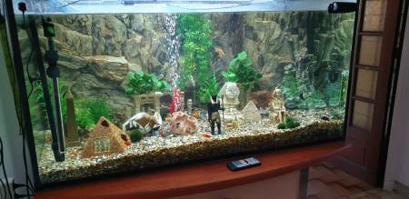 aquariophile philippe-rolland