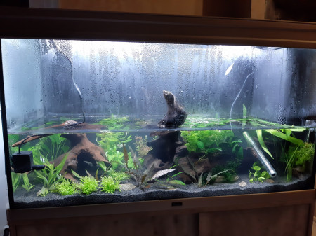 aquariophile Arnetul
