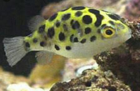 aquariophile ColeTrickle