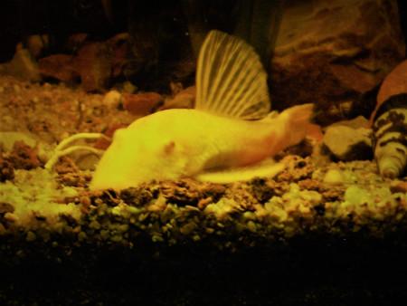 aquariophile Czhug