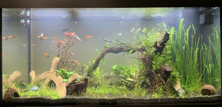 aquariophile Ermelo