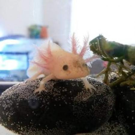 aquariophile MoaMystik