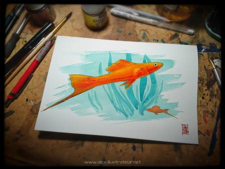 aquariophile Lucereine