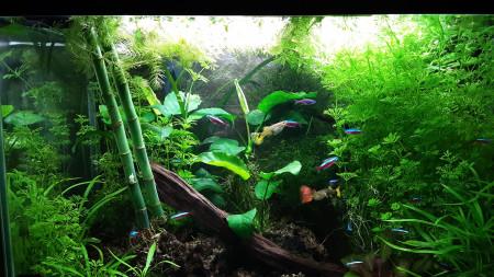 aquariophile marcval
