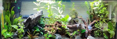 aquariophile Litenor