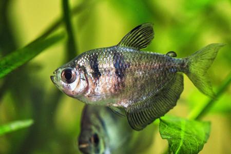 aquariophile Aquavel