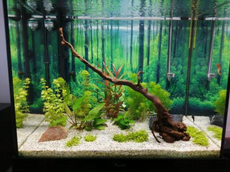 aquariophile Fish59