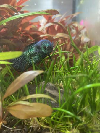 aquariophile Thomas37