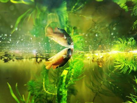 aquariophile Cali