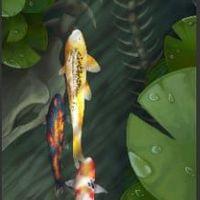 aquariophile oeildenuit