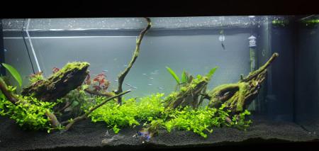 aquariophile Kyz44