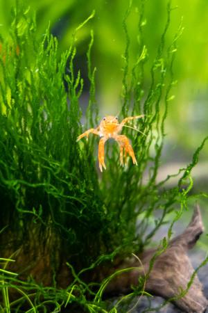 aquariophile Clems