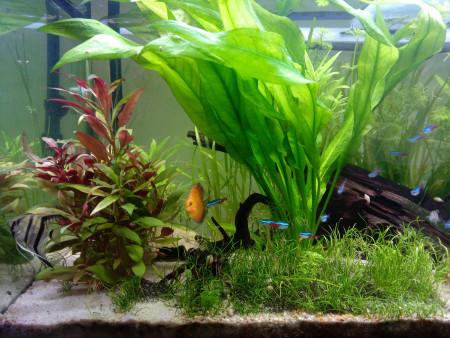 aquariophile Georges62