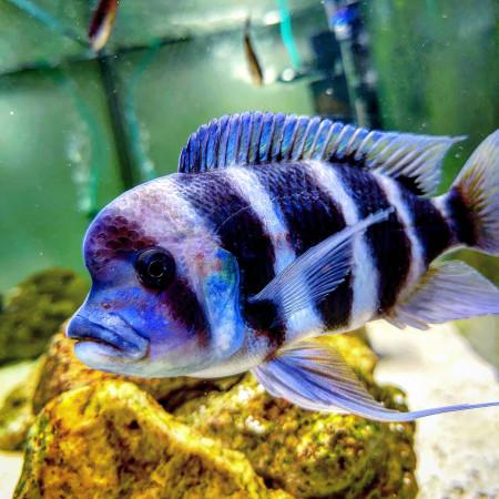 aquariophile Eydaxor